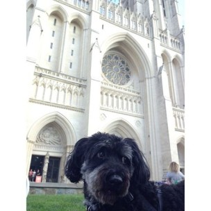 Washington National Cathedral Blessing of the Animals
