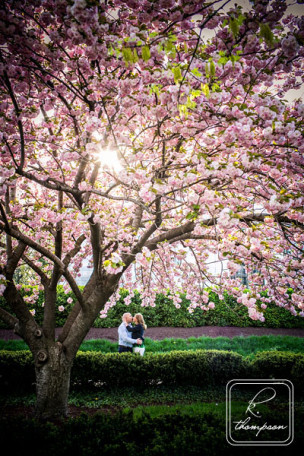 DC Cherry Blossom Engagement Session with K. Thompson Photography